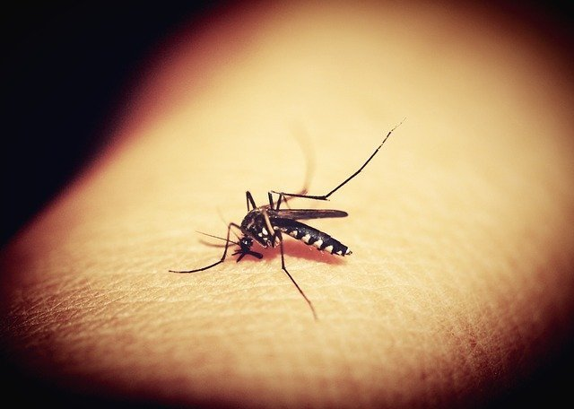 Mosquitoe 1548975 640