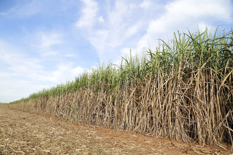 Reed bed 4362529 1280