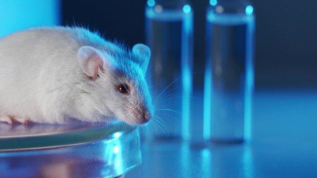Cientista de pesquisa medica testa droga experimental de vacina em um rato de laboratorio 159160 1454