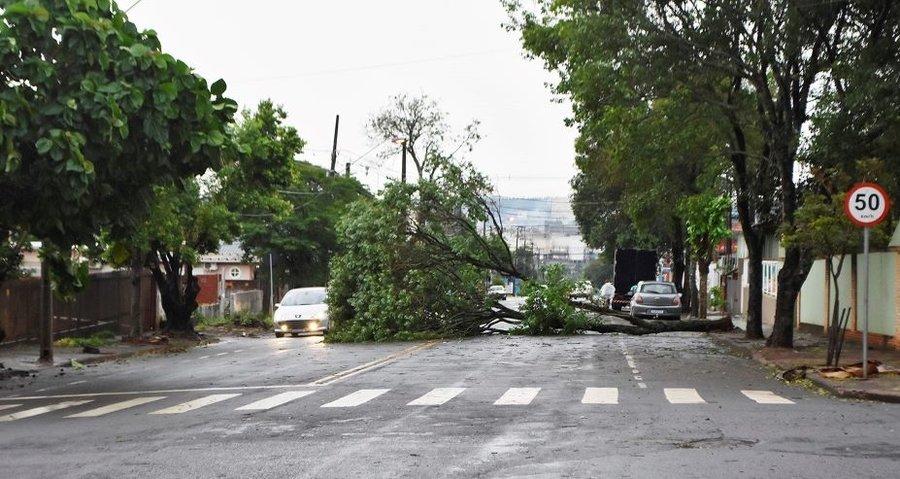 Arvore caida na rua almirante tamandare carlos rodrigues 03