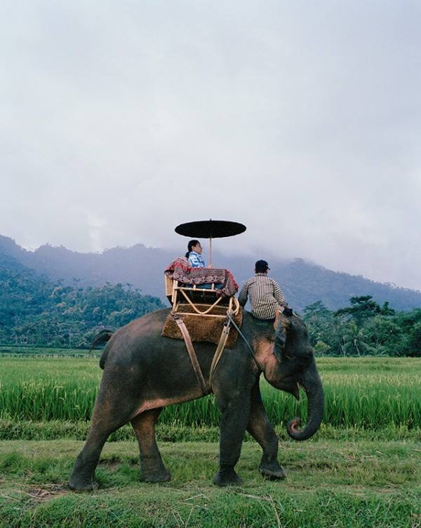 jiwo_elephant ride