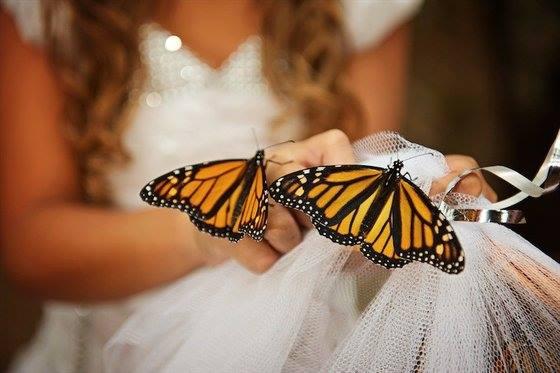 Polêmica: A moda é congelar borboletas vivas para soltar no casamento