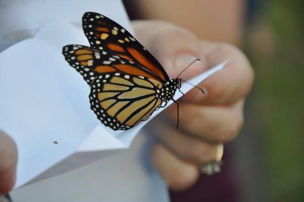 borboletas-casamento-03