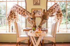 giraffe-manor-lua-de-mel-africa-destaque