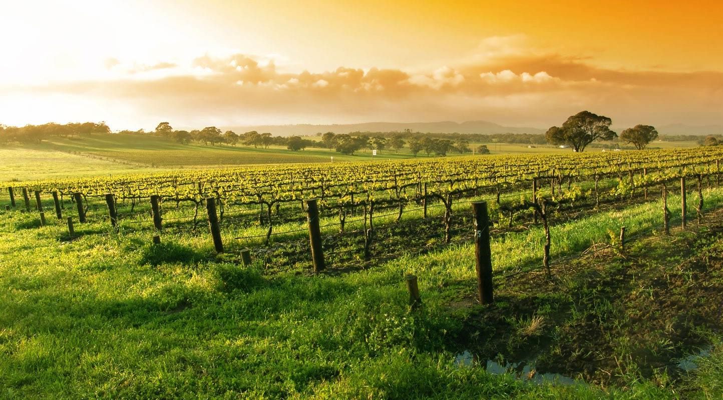 Napa Valley e Sonoma Valley: Lua de mel regada a vinho