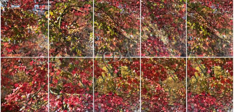 Série Outono - Alessandra Rehder