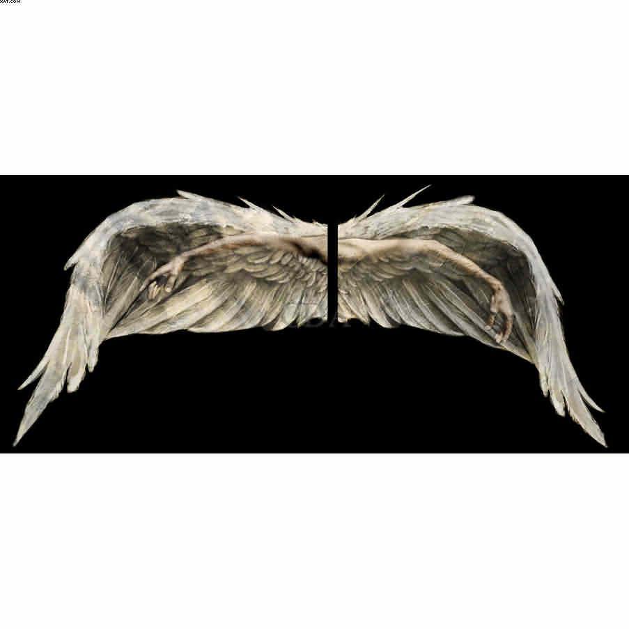 Wings - Catharina Suleiman