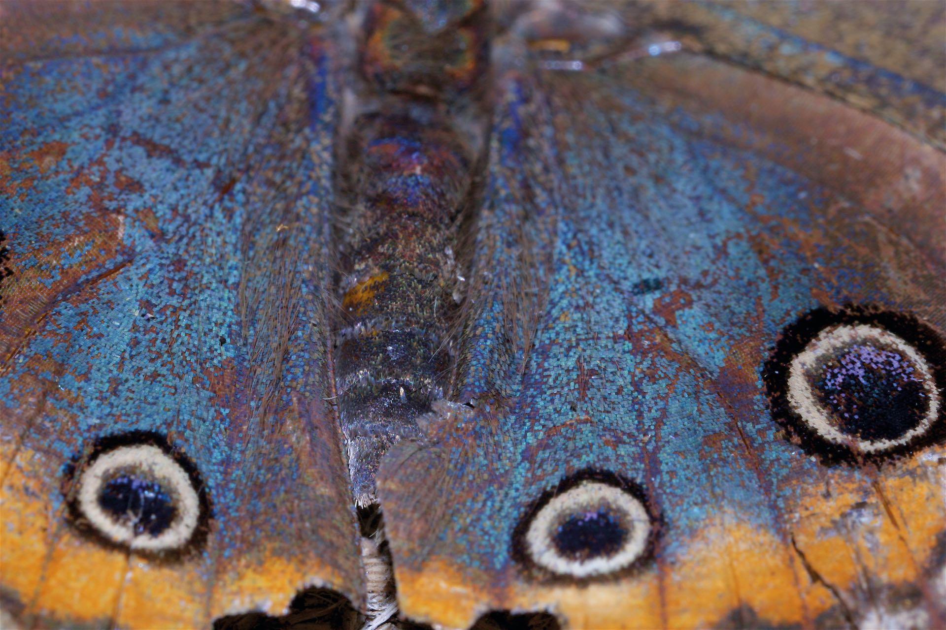 Primerísimo primer plano de la belleza de una mariposa en Misiones.