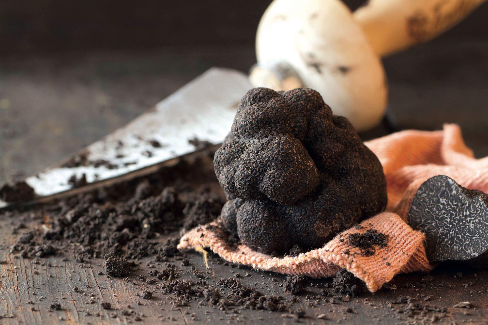 Invertir en la producción de trufas, nueces de pecán, vinos, aceitunas o aceite: una opción interesante para obtener ganancias.