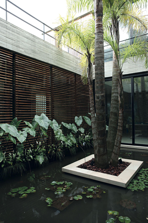 Un estanque con plantas acuáticas recibe en el acceso a la casa.
