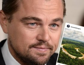 Incendios Amazonas Celebrities DiCaprio