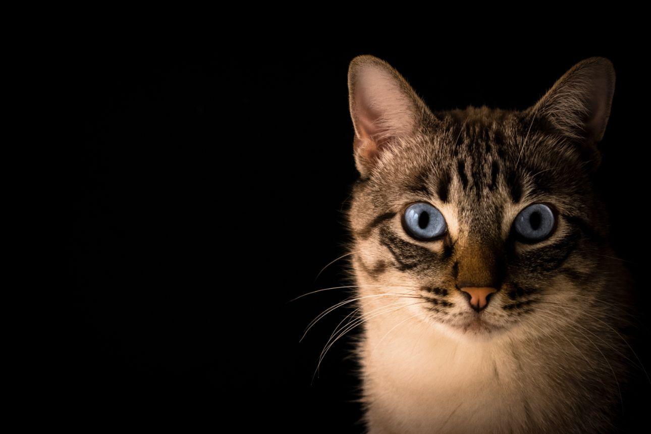 Apps y juegos divertidos para entretener a tu gato
