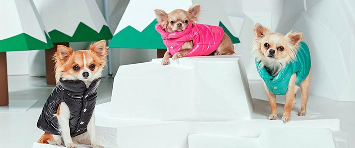 Ropa para perros... ¡de navidad y de lujo!