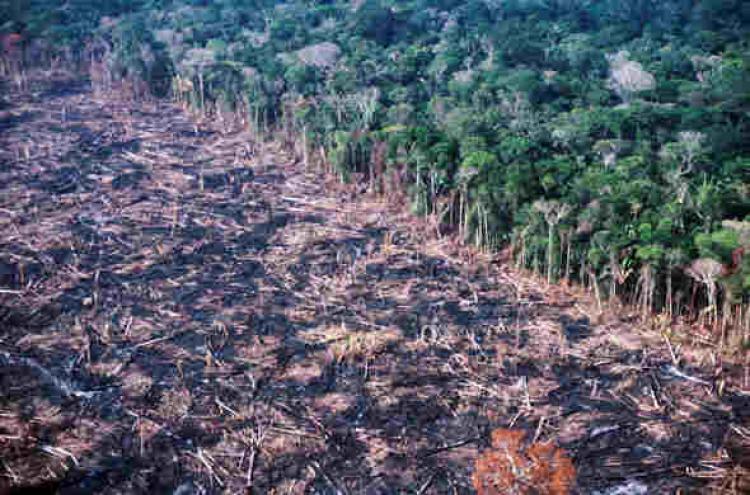 Qual o impacto do desmatamento para a agricultura?