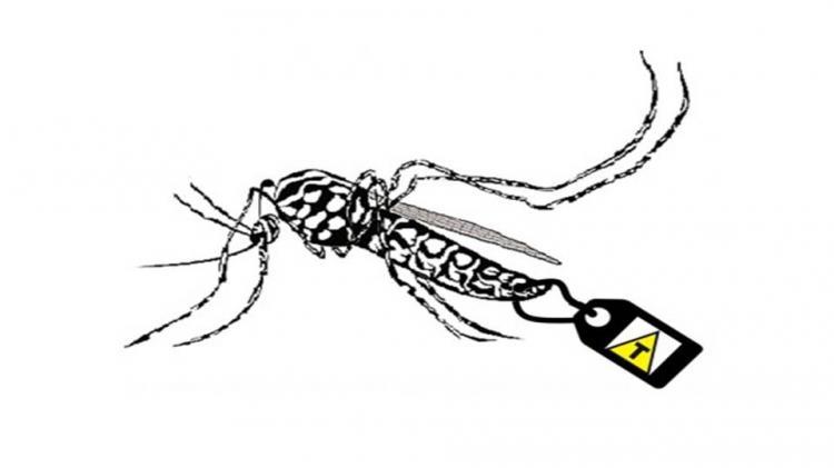 O negócio do zika e os mosquitos transgênicos