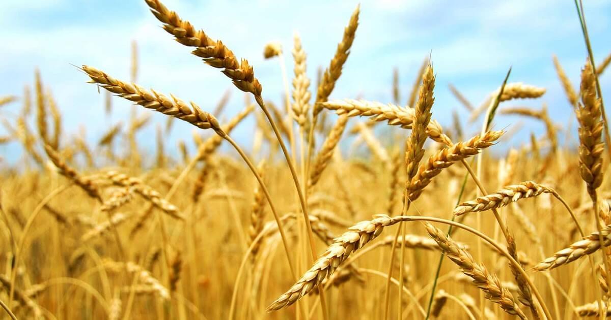 Não só de pão viverá o ser humano (Mateus 4,1-11) [Ildo Bohn Gass]