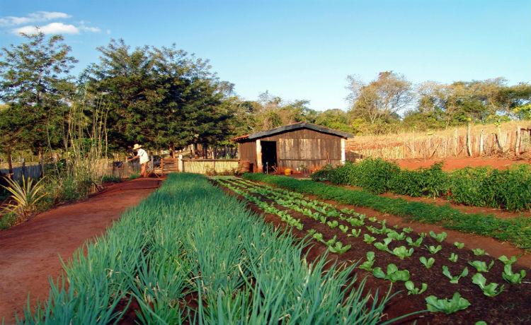 Outra Agricultura possível
