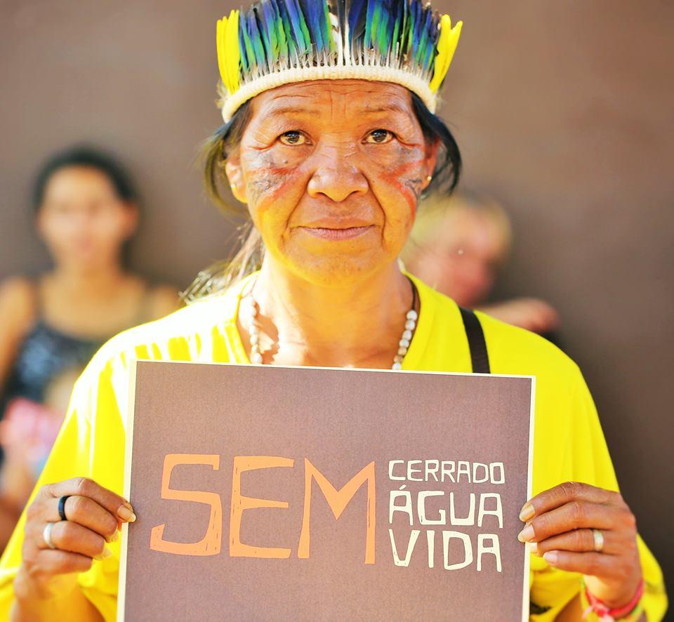 Cerrado Brasileiro: alerta sobre os impactos da destruição
