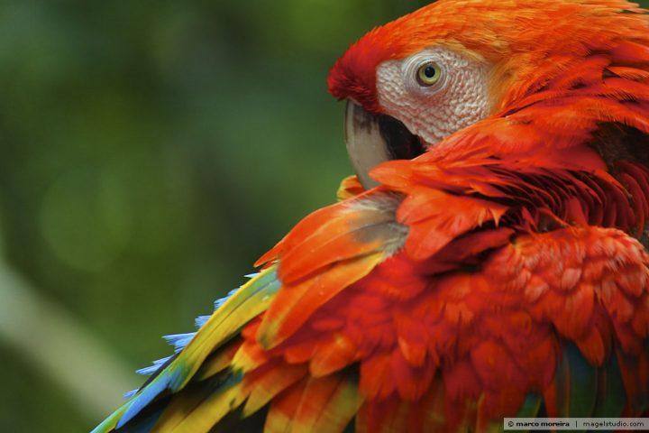 Por que negligenciamos um projeto para proteger a Amazônia?