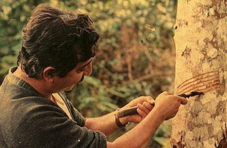 Economia verde: o Acre contra Chico Mendes