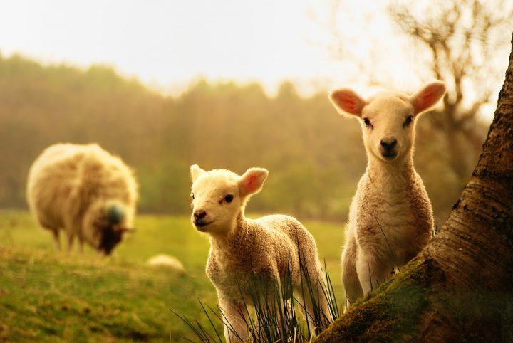A multidão estava como ovelhas sem pastor