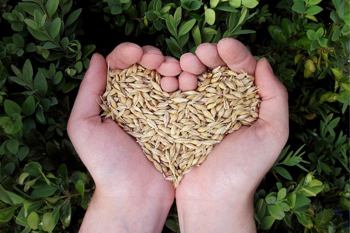 A Segurança Alimentar e a Democracia