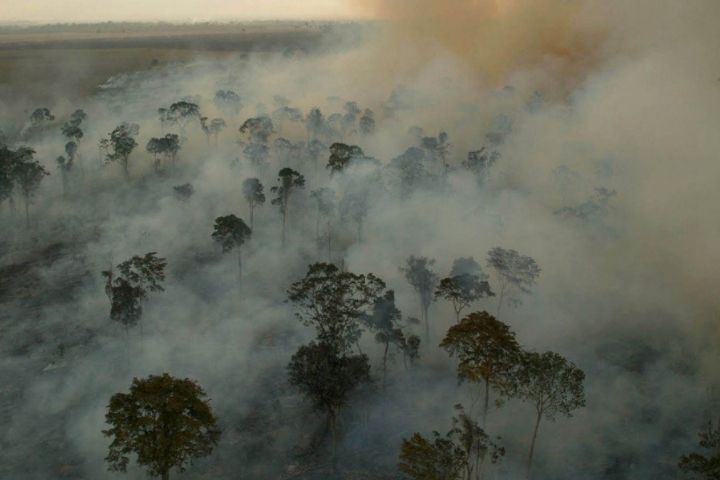 """""""Amazônia corre o risco de se converter em uma savana degradada"""""""