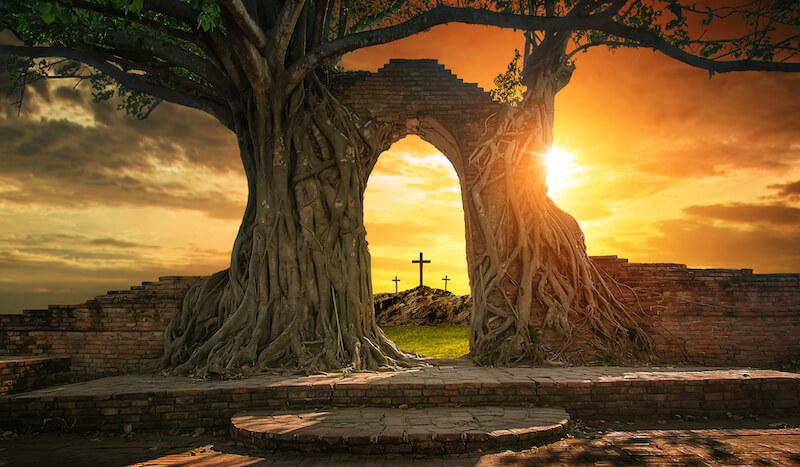 Reflexão do Evangelho: Montado num jumentinho, o messias pobre e desarmado