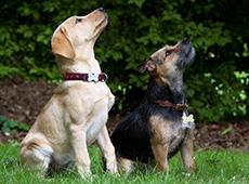 Curso Profissionalizante Online de Adestrador de Cães