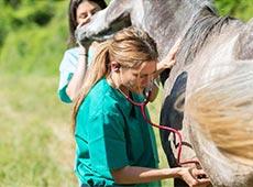 Curso Profissionalizante de Auxiliar Veterinário - Equinos e Bovinos