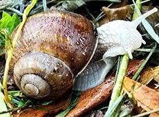 Curso Online Escargots - A Tecnologia Correta de Criação