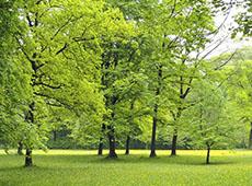 Curso Online Reposição Florestal - Como Conservar Recursos Naturais com Rentabilidade