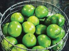 Curso Online Produção de Limão Taiti