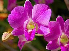Curso Online Cultivo de Orquídeas para Fins Comerciais ou Hobby