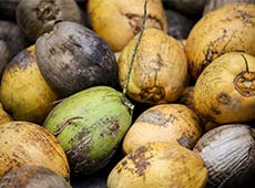 Curso Online Controle de Pragas e Doenças do Coqueiro