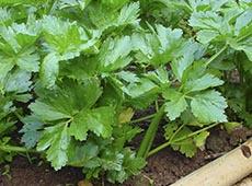 Curso Online Cultivo e Uso de Plantas Condimentares