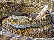 Curso Online Criação de Serpentes Para Produção de Veneno