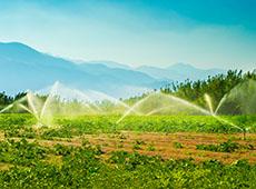 Curso Online Irrigação em Frutíferas