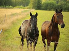 Curso Online Alimentação de Cavalos