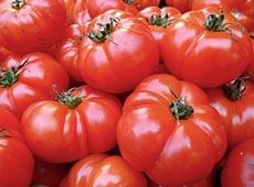 Curso Online Processamento de Tomate