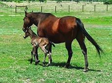 Curso Online Reprodução de Cavalos