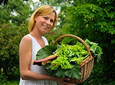 Curso Online Cultivo Orgânico de Hortaliças em Estufa