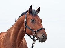 Curso Online Como Comprar Cavalos