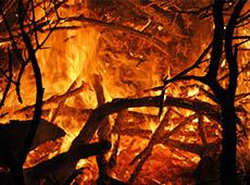 Curso Online Formação e Treinamento de Brigada de Incêndio Florestal