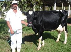 Curso Online Manejo da Vaca Gestante no Parto e Pós-Parto