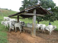 Curso Online Como Aumentar a Rentabilidade na Pecuária de Corte