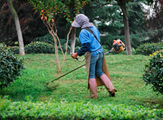 Curso Online Treinamento de Jardineiro