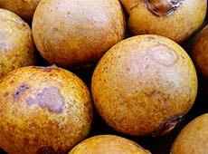 Curso Online Cultivo e Processamento de Coco Macaúba para Produção de Biodiesel