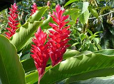 Curso Online Como Produzir Plantas Ornamentais