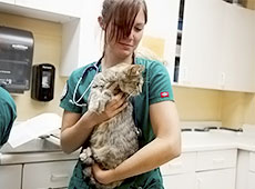 Curso Online Primeiros Socorros para Cães e Gatos - Parada Respiratória e Cardíaca, Desmaios, Estado de Choque e Convulsões